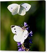 Butterfly - Visiting Canvas Print