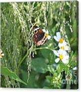 Butterfly 11 Canvas Print