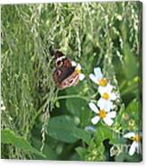 Butterfly 12 Canvas Print