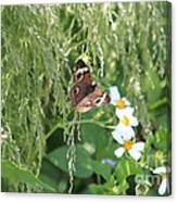 Butterfly 14 Canvas Print