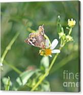 Butterfly 21 Canvas Print