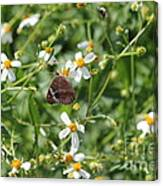 Butterfly 28 Canvas Print