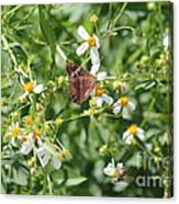 Butterfly 30 Canvas Print