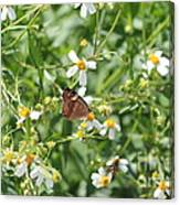 Butterfly 32 Canvas Print