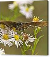 Butterfly 3319 Canvas Print