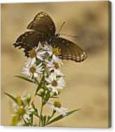 Butterfly 3321 Canvas Print