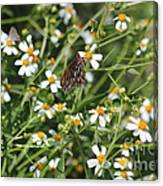 Butterfly 35 Canvas Print