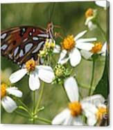 Butterfly 41 Canvas Print