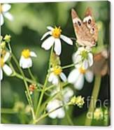 Butterfly 44 Canvas Print