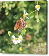 Butterfly 46 Canvas Print