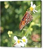 Butterfly 47 Canvas Print