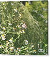 Butterfly 49 Canvas Print