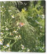 Butterfly 50 Canvas Print