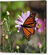 Butterfly 89 Canvas Print