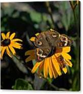 Butterfly 90 Canvas Print