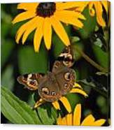 Butterfly 94 Canvas Print