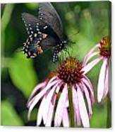 Butterfly And Coine Flower Canvas Print