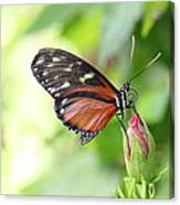 Butterfly At Rest Canvas Print