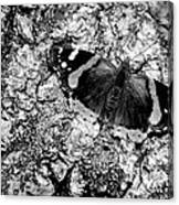 Butterfly Bark Black And White Canvas Print