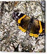 Butterfly Bark Canvas Print