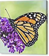 Butterfly Beauty-monarch Canvas Print