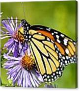 Butterfly Blessing Canvas Print