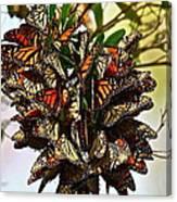 Butterfly Bouquet Canvas Print