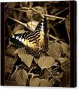 Butterfly Brown Canvas Print