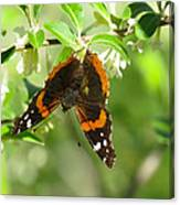 Butterfly Buds Canvas Print