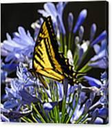 Butterfly Catcher Canvas Print