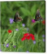Butterfly Chase Canvas Print