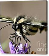 Butterfly Closeup Canvas Print