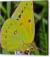 Butterfly Collection Macro Canvas Print