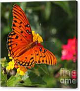 Butterfly Diaries IIi Canvas Print