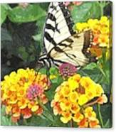 Butterfly Dining Bdwc Canvas Print