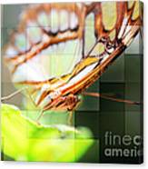 Butterfly Frosted Glass Canvas Print