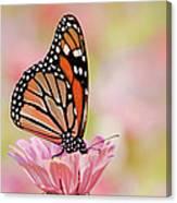 Butterfly Garden IIi Canvas Print