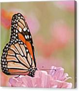 Butterfly Garden Iv Canvas Print
