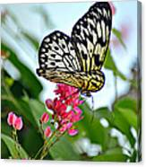 Butterfly Glow Canvas Print