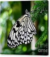 Butterfly II Canvas Print