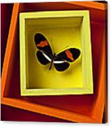 Butterfly In Box Canvas Print
