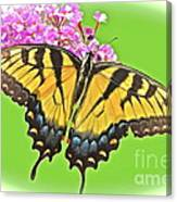 Butterfly In Candyland Canvas Print
