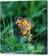 Butterfly In Square  Canvas Print