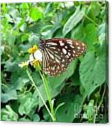 Butterfly In The Wild Canvas Print