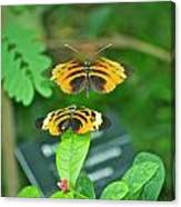 Butterfly Lovers Canvas Print
