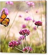 Butterfly - Monarach - The Sweet Life Canvas Print