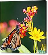 Butterfly Monarch On Lantana Flower Canvas Print