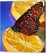 Butterfly Nectar Canvas Print