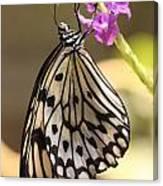 Butterfly On A Stem Canvas Print