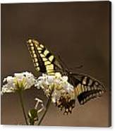 Butterfly On Blossom Flowers Canvas Print